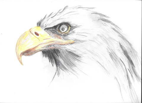 Maggie Leung_Bald Eagle (Small)